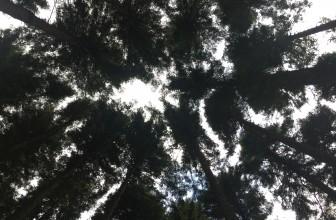 Marija Herceg: Šta se čuva u parku na Kozari?