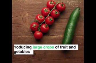 [video] Kako od poljoprivrede živeti normalno? Pogledajte primer Holandije